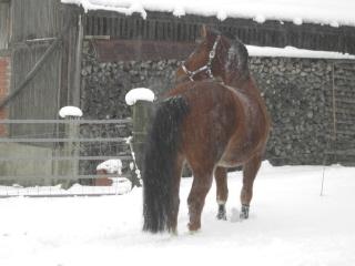 winterpferde2.jpg