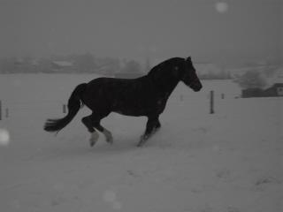 winterpferdeklein.jpg