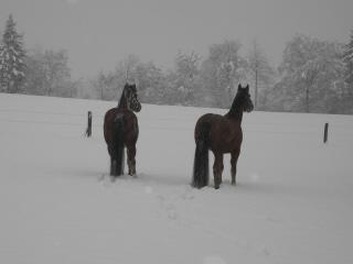 winterpferdeklein1.jpg