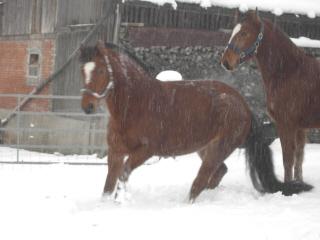 winterpferdeklein3.jpg