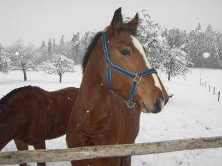 winterpferdeklein4.jpg