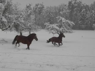 winterweideklein6.jpg