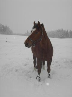 winterweideklein8.jpg
