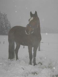 winterweideklein9.jpg